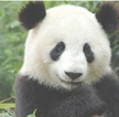 New Panda Restaurant